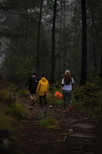 human three people walking on footpath near trees person