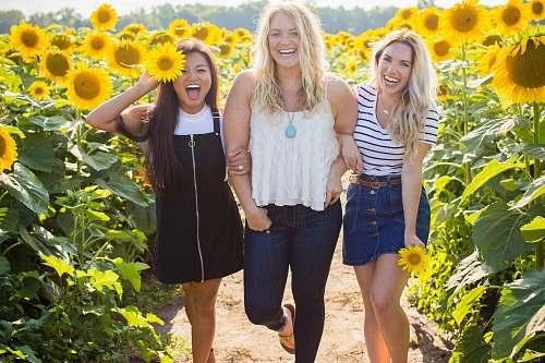 sunflower three women standing between sunflowers woman