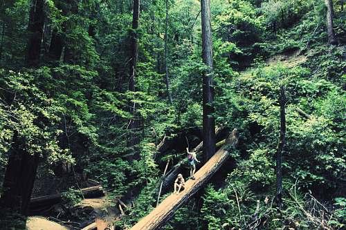 tree two women walking on bridge during daytime forest