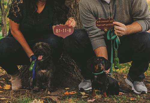 person woman holding dog beside man holding dog leaning on tree human