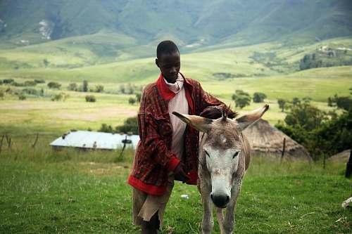 people man holding beige horse donkey