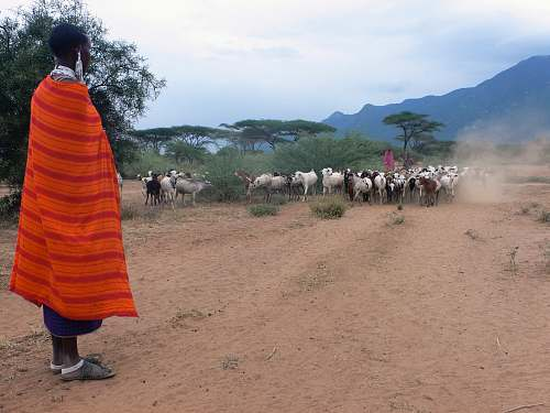 human man standing near herd of goats during daytime people
