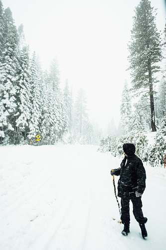 human person holding black ski pole between green pine trees covered with snow during daytime people