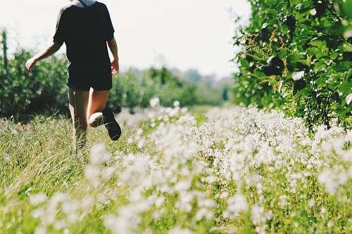 human person walking on white flower field people