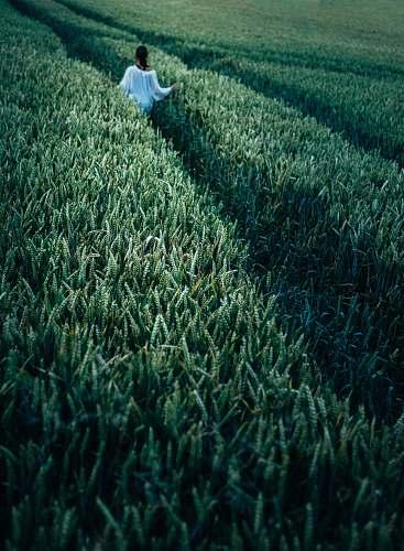 woman woman standing in wheat field field