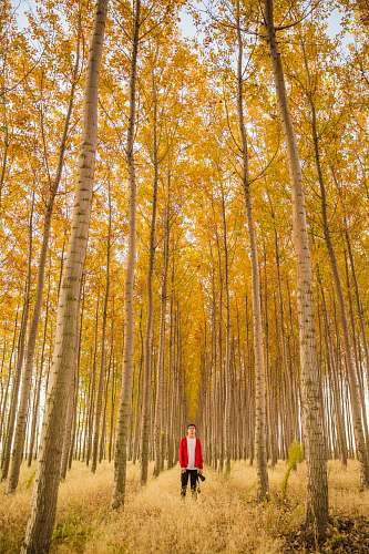 photo flora man standing in the middle of tall trees plant free for commercial use images