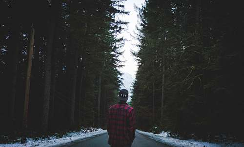 man person in plaid sport shirt standing on asphalt road between trees male