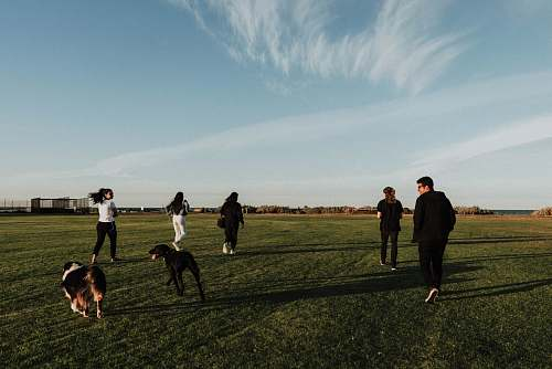 canine group of people jogging on green field during daytime pet