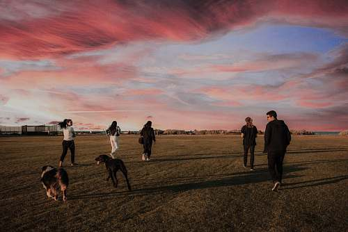 fitness four women and one man running together with two dogs on grass field jogging