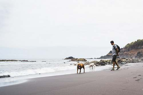 person man and dogs on the seashore people