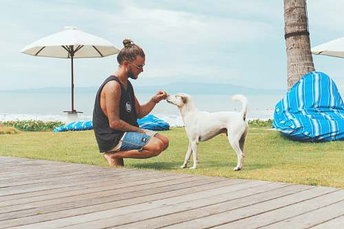 person man feeding white dog people