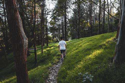 person man wearing white shirt hiking near grass and trees plant