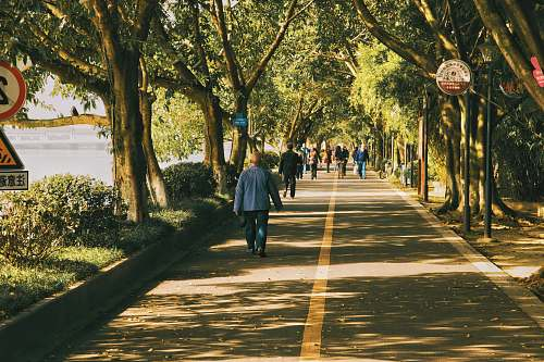 person people walking on road lined with trees path