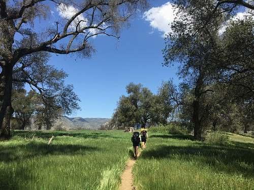 person people walking on trail across grass field trail