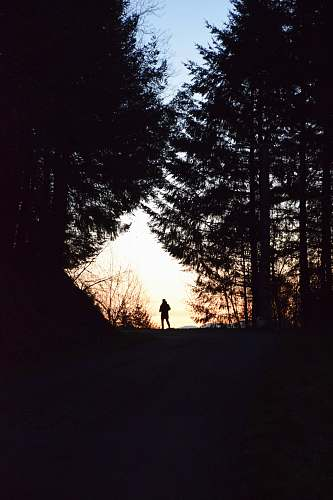 person silhouette of man stainding on forest nature