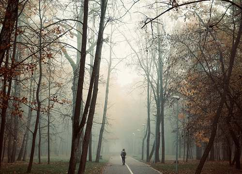 person tall trees beside road nature