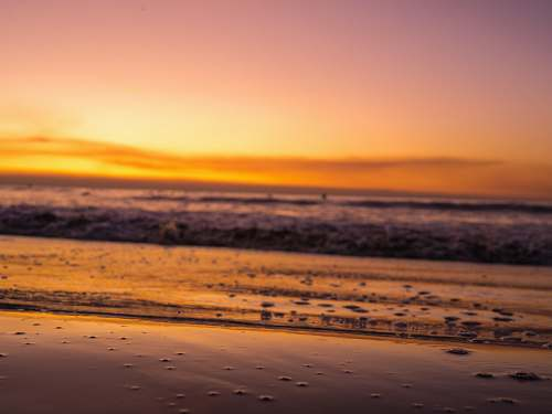 nature selective focus photography of seashore during golden hour ocean