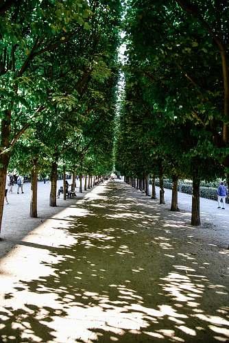 human pathway between trees garden