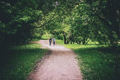 human people on pathway between trees path