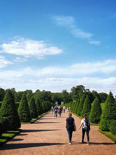 human people walking on concrete pathway between topiary trees plant