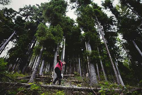 nature person stepping on gray log forest