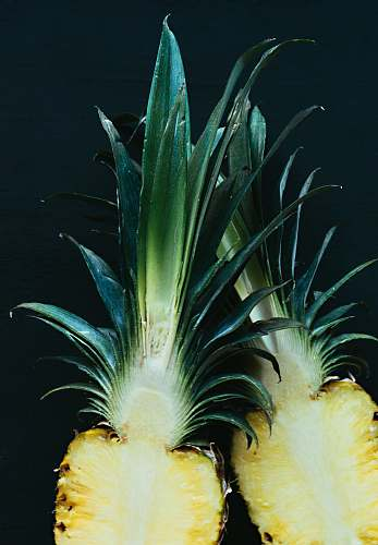 fruit pineapple slices with crown pineapple