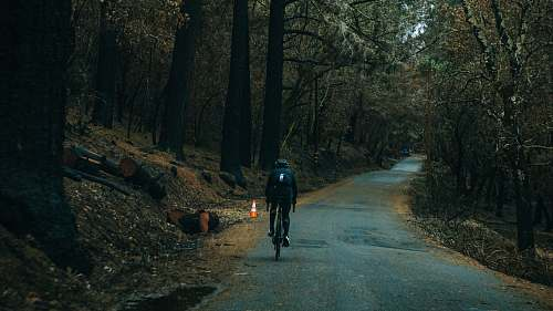calistoga man cycling on road between trees at daytime tree
