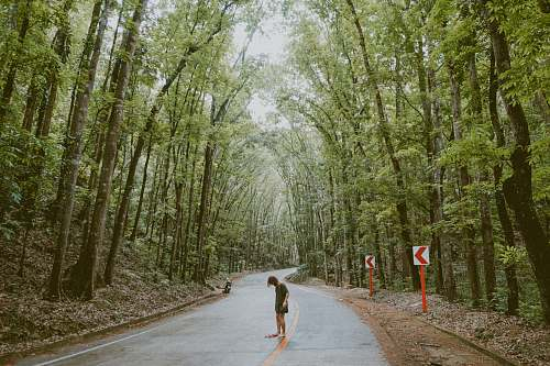 forest person standing in the street with trees beside it route