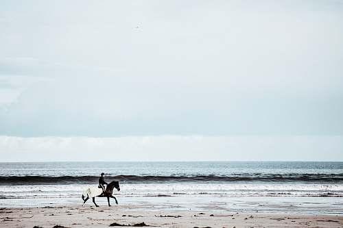 beach person riding on horse running in seashore ocean